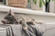 Gatito dormido en un radiador de gas natural