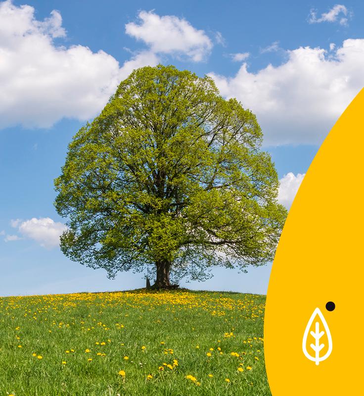 eficiencia enerxética, árbore